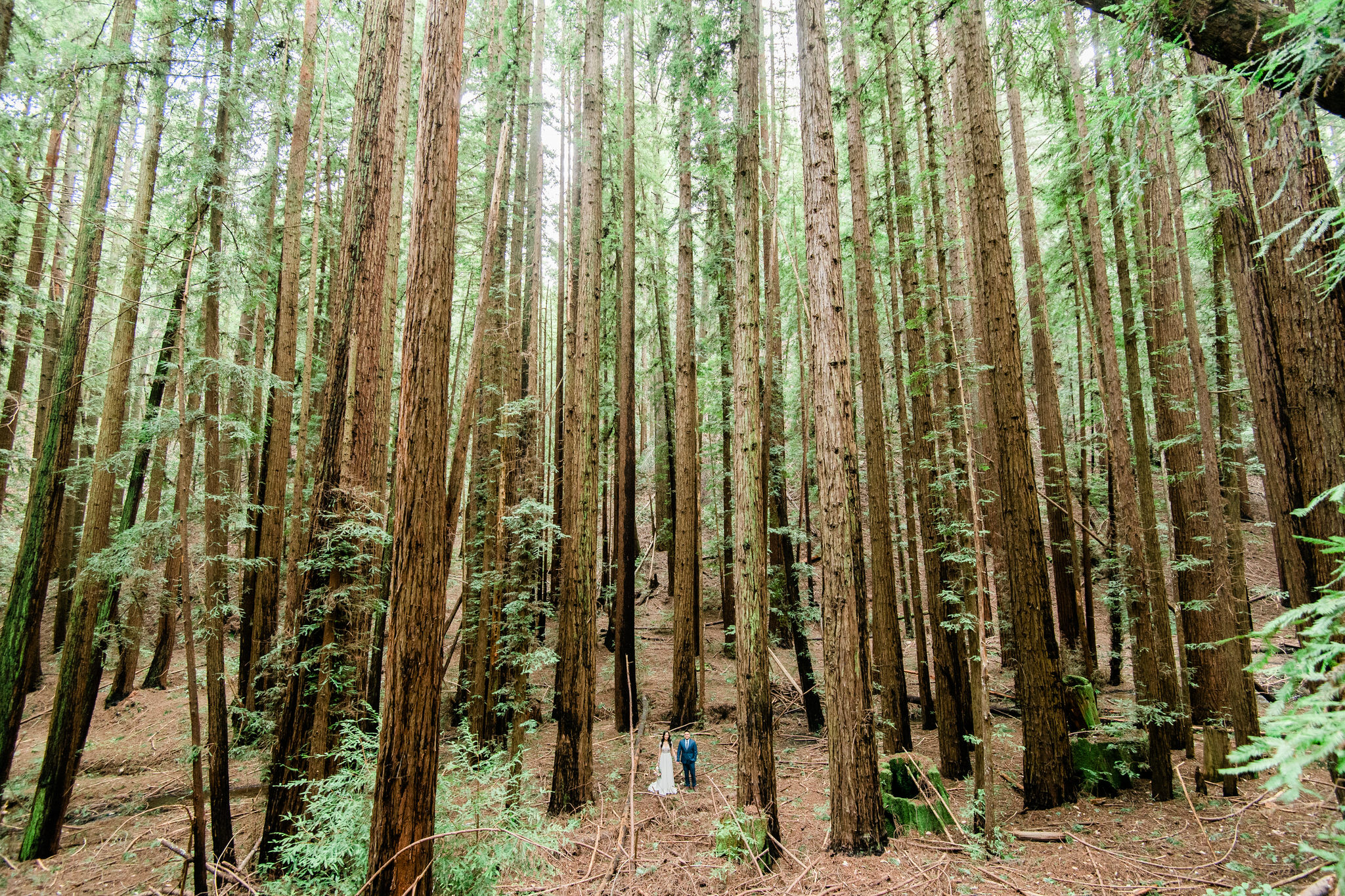 Bride and Groom standing in the middle of sequoia trees in California